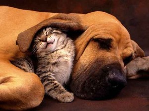 Cats And Dogs Hugging